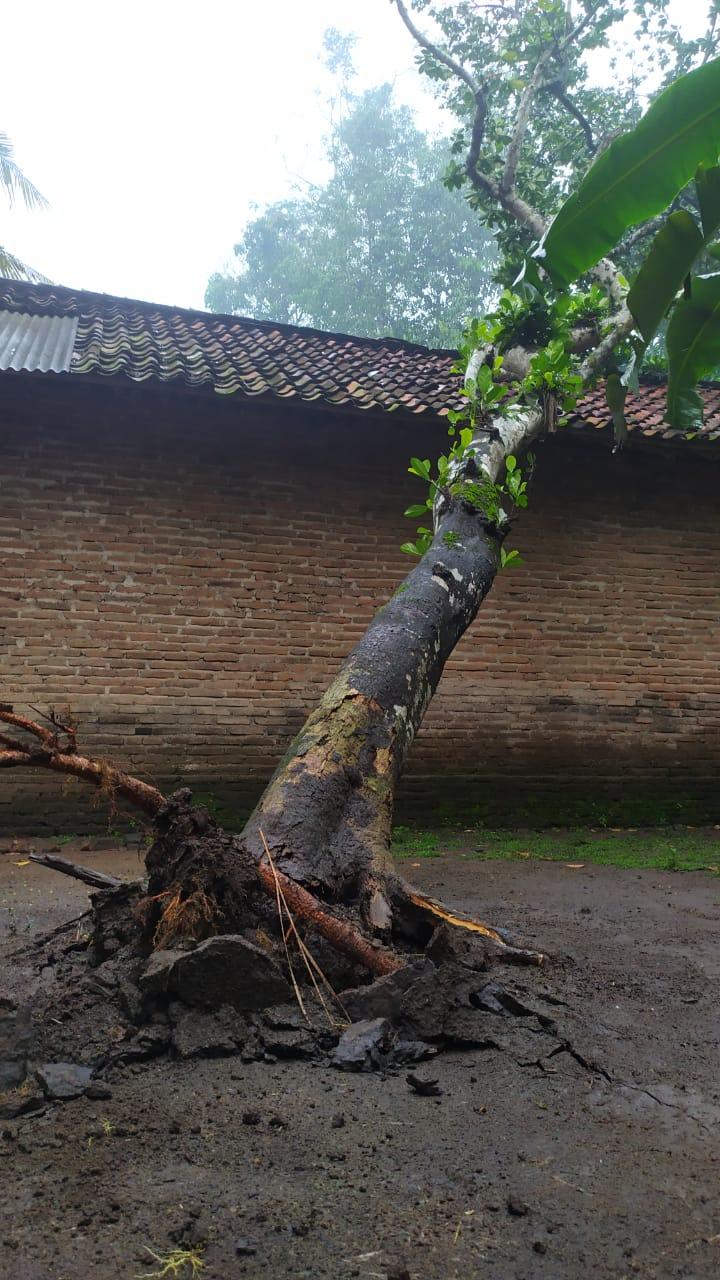 Pohon Tumbang Menimpa Rumah